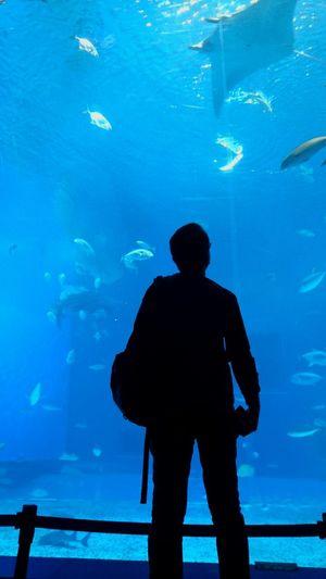 Aquarium Silhouette Beauty In Nature Nature UnderSea Blue Okinawa Churaumi Aquarium EyeEmNewHere