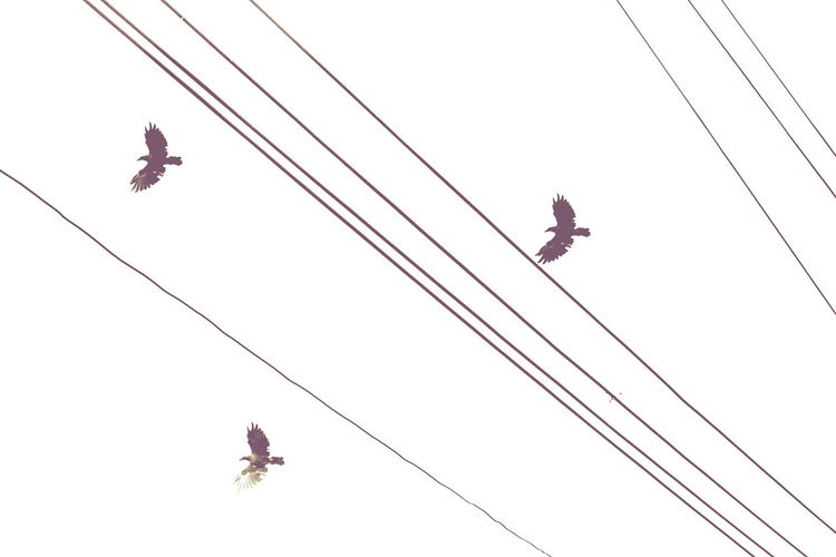 Crows and Wires Art Birds Crows Day Digital Art Flight Flying Nature Outdoors Photoart Ravens Sky Wires The Minimalist - 2019 EyeEm Awards