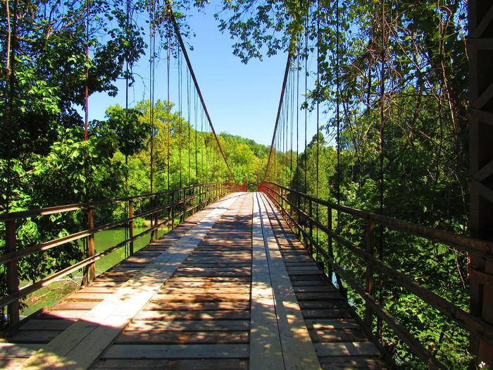 Narrow footbridge along trees in forest