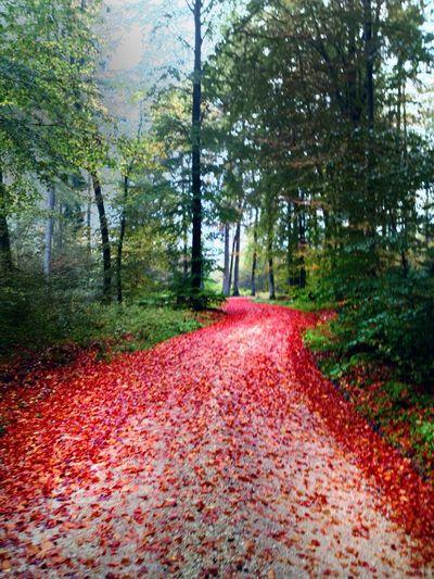 Autumn Bavaria Red Leaf