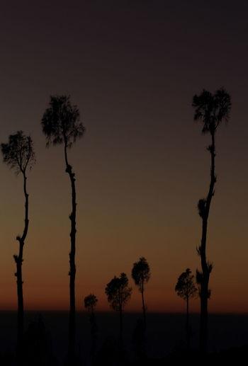Atmosphere Clear Sky Landscape O Orange Outdoors P Photography Purple Silhouette Silhouettes Sunrise Sunrise_Collection Sunrise_sunsets_aroundworld Sunset Tectonic