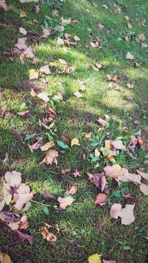 Autumn Colors Autumn Nature Colors Photo Eyemphotography Leaf 🍂 Leafporn