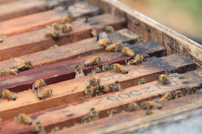 Close-up of bees on crate