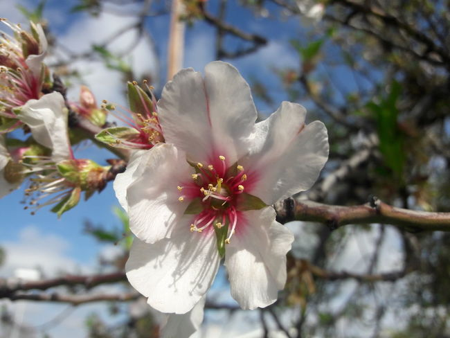 Flower Nature Plant Blossom Fragility Beauty In Nature Growth Springtime Outdoors Flower Head Close-up No People Day Freshness