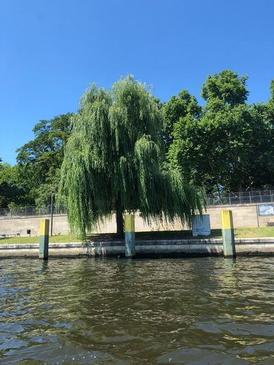 Trauerweide Weide IPhone X Blue Sky IPhone X Photography Spree River Berlin Tree Water Plant Sky Nature Clear Sky Waterfront Day No People Blue Tranquility River Scenics - Nature Outdoors Architecture Sunlight Beauty In Nature Growth