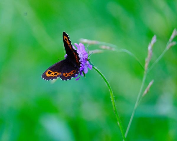 Animal Themes Animal Wildlife One Animal Animal Animals In The Wild Insect Invertebrate Animal Wing Beauty In Nature Focus On Foreground Butterfly - Insect Flowering Plant Green Color Nature Flower Close-up