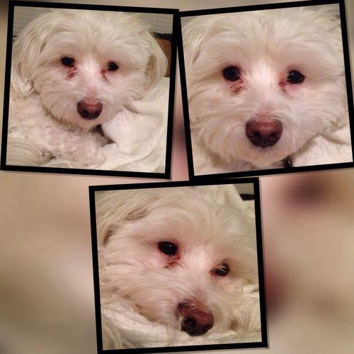 My cute dog I Love My Dog Dog