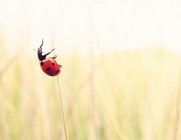 Lieveheersbeestje Wildlife Nature