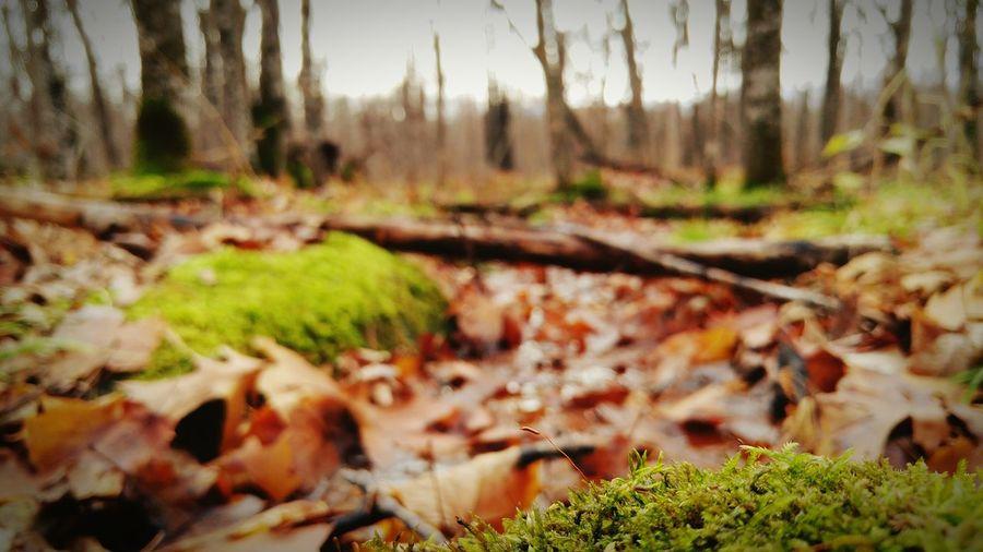 Creek and Moss