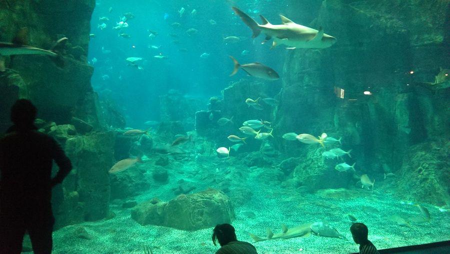 Aquarium Fishes Silence Presence