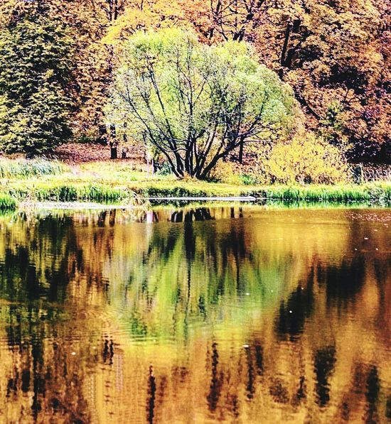 Reflection Tree Lake Water Nature Tranquil Scene Outdoors No People Scenics Day Beauty In Nature Tranquility Waterfront Animals In The Wild Growth Grass Animal Themes Sky EyeEm Selects Tree Trunk Forest Green Color Backgrounds Reflection Sunlight Going Remote
