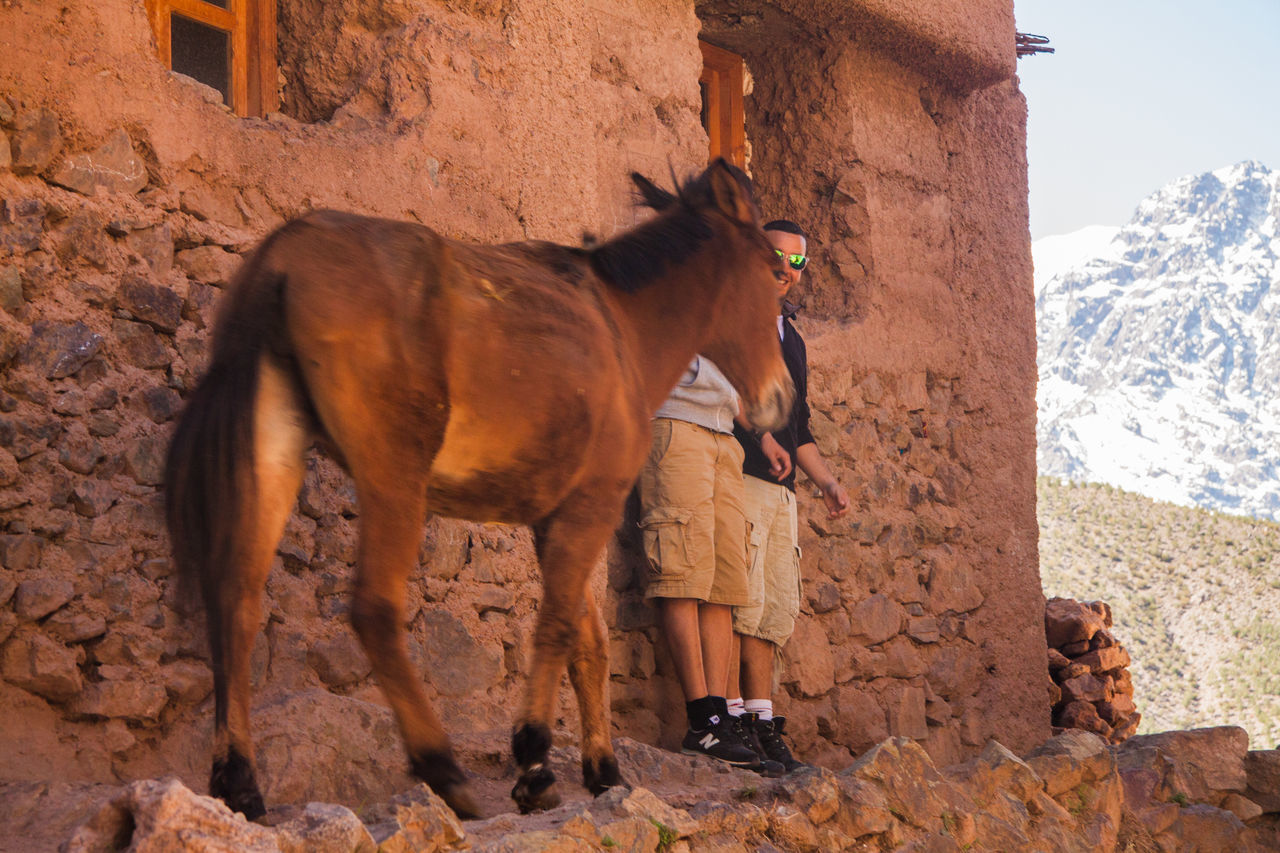 animal themes, domestic animals, one animal, mammal, horse, standing, full length, livestock, day, brown, outdoors, built structure, building exterior, no people, sky, architecture, nature