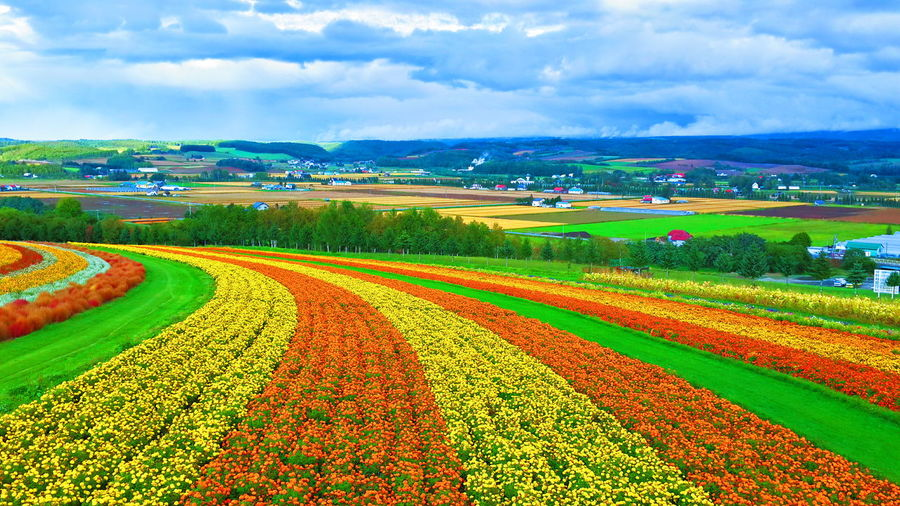 view at furano, biei, Hokkaido Japan Landscape_photography Travelphotography EyeEm Best Shots Japan