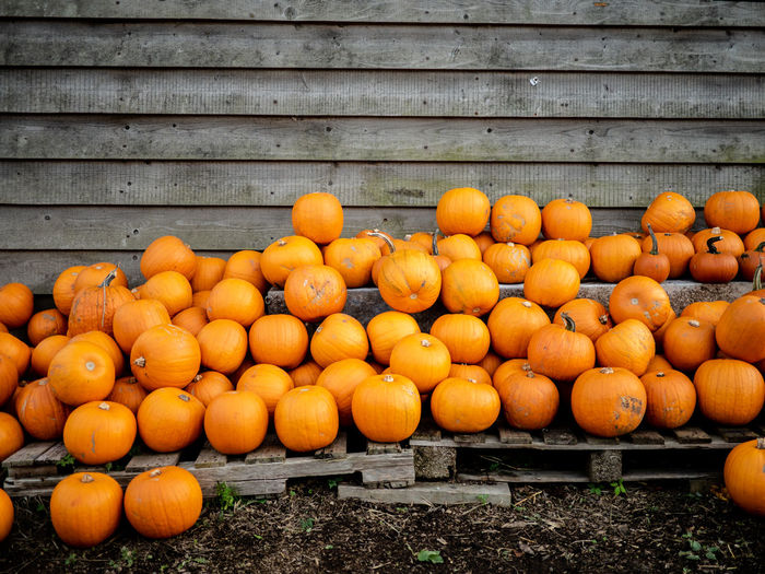 Pumpkins against wooden wall