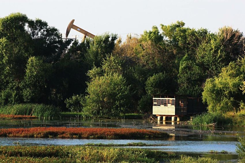 Jenna Welch I-20 Wildlife Preserve Water Tree Tranquil Scene Lush Foliage Nature Outdoors Solitude Non-urban Scene Beauty In Nature Contrasts Oil Well Pump Jack Midland, TX TakeoverContrast