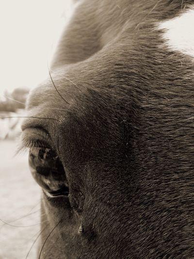 HORSE Loving Close-up One Animal 🐴horses&ponies🐴 EyeEmNewHere