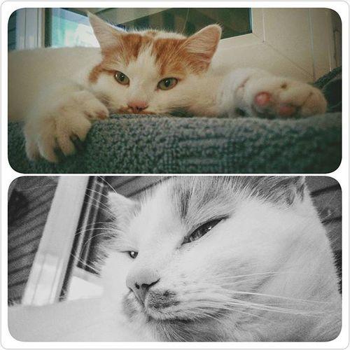 Catsofinstagram Cats Sleeping Relax Paws Catlife Cutepaws Cuteness Cutenessoverload