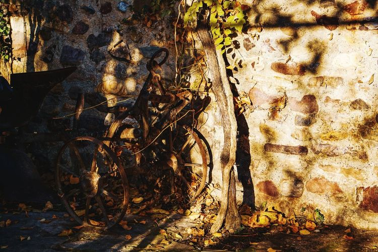 Tree trunk by wall