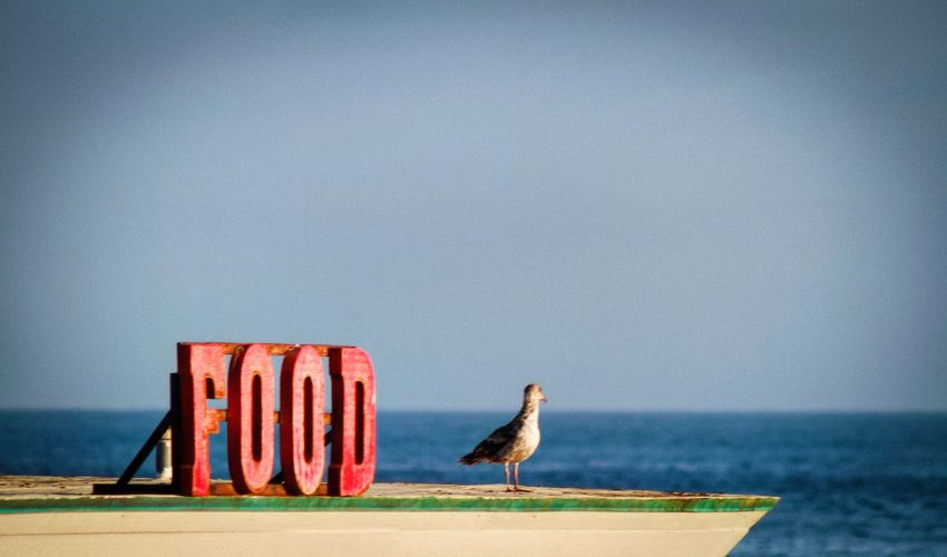 Seagull perching on wooden post against sea