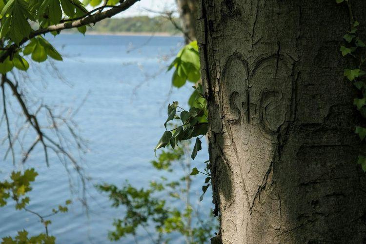 Secret Love Lake View