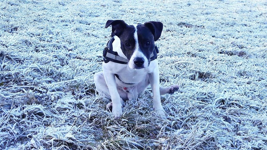 Was kukst du ?? 👀👀 Animal Themes Domestic Animals One Animal Mammal Nature Pets Dog No People Outdoors Portrait Cold Temperature Snow Day Wintermode Jackrussellcross Dogmodel Dogphoto Dog Photography Dogs Of EyeEm Dog❤ Doggy Dogsofeyeem Posing For The Camera Doglife