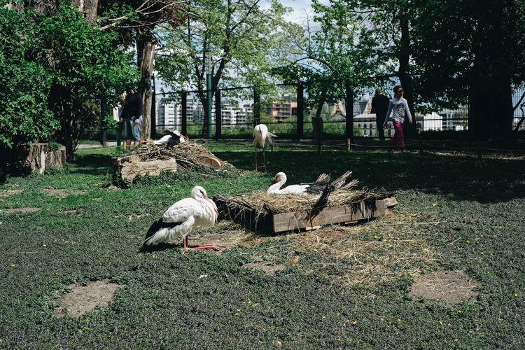 Bird Tree Plant Animal Animal Themes Vertebrate Animal Wildlife Animals In The Wild Group Of Animals Nature Day Land Grass Green Color Incidental People Field Growth Outdoors Flying