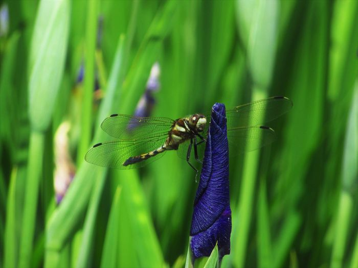 Dragonfly Nature Close-up Green Color Insect Nature No People Outdoors Plant