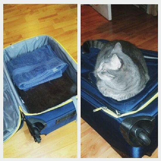 Trying to pack my suitcase...Kale said NOPE. I've been waiting for him to get off for an hour, I don't have the heart to move him Dailypic Instacat Instagood Catpics tabby wtfcat wtf FML nope TravelPreparationsOnHold funny cute ilovehim MyLifeWithFourCats