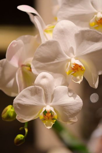 Flower Flowering Plant Beauty In Nature Plant Fragility Flower Head Petal White Color Nature Stamen Pollen Orchid Close-up Growth Freshness Vulnerability