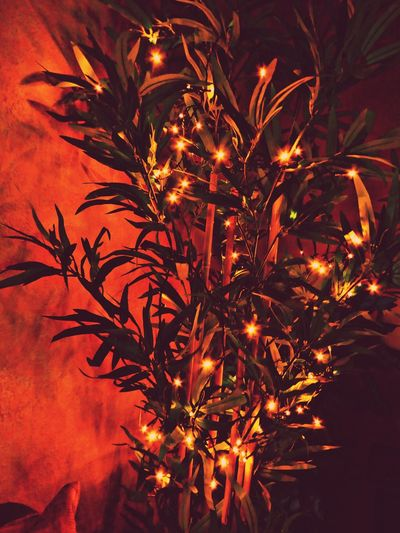 i have no Christmastree at home 🙄but..do'nt worry,i decorated my bambootree🤗 For My Friends😚 X-mas Time Cozy At Home Simple Beauty Bright Lights In A Tree Decoration Dreaming.. Love It❤ Nightlights Night Tree Nature