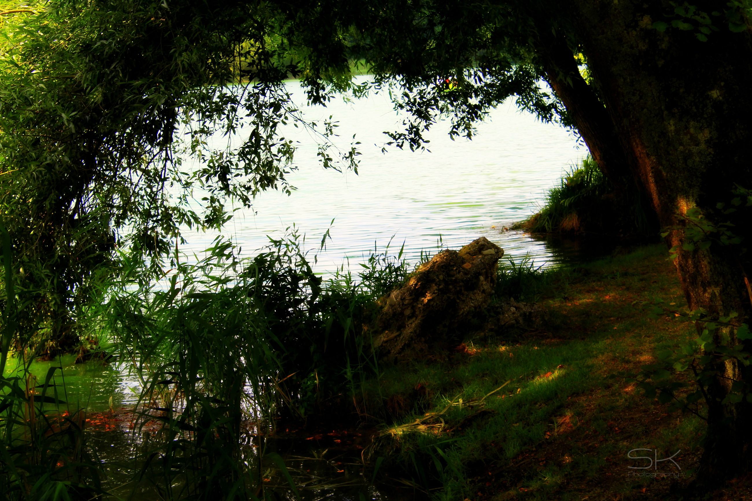 water, tree, tranquility, tranquil scene, nature, beauty in nature, scenics, growth, lake, reflection, forest, green color, plant, idyllic, non-urban scene, grass, branch, day, no people, river