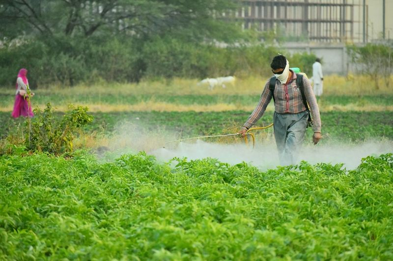 Spraying Water Working Agriculture Occupation Nature Grass Outdoors People Growth Men Rural Scene Manual Worker Pesticides Pesticide Spray Poisoning Unnatural Meaningful  Farmer Fields Farming Green Village Food Poisoning