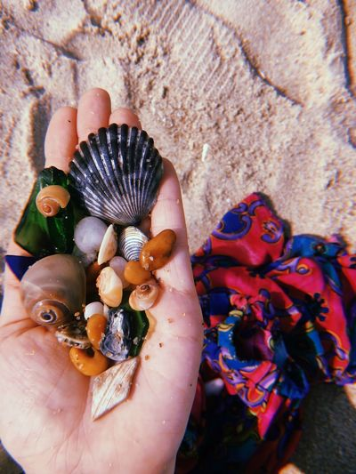 #collection #color #marine #ocean #sand #sea #seaglass #seashells Close-up Day Focus On Foreground Human Hand Nature