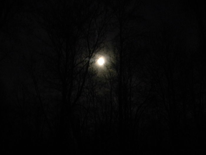 Astronomy Bare Tree Beauty In Nature Branch Bright Night Dark Full Moon Moon Moon Moon Light Moonlight Nature Night Nighttime No People Outdoors Planetary Moon Scenics Silhouette Sky Sky And Clouds Supermoon Tranquil Scene Tranquility Tree