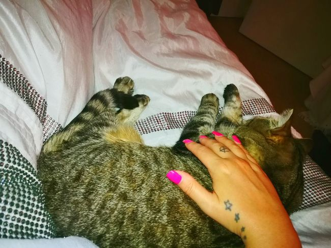 Catcuddles Snuggles In Bed Cats Cuddlycat Bedtime Pinknails Anarchytattoo Stars