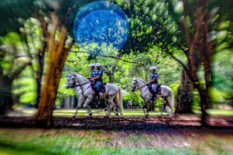 EyeEmNewHere outdoors real people day horse Police Police Horses Policeman Simanovic HDR HDR Collection Hdr_Collection Hdrphotography Hdr Edit Popular Popular Photos Hello World Ibirapuera EyeEm Best Shots Tvminuto Eye4photography  Nature EyeEmNewHere Desfocado Desfocada Desfocus