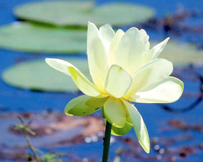 Check This Out Hello World Relaxing Taking Photos Enjoying Life flowers Waterscape water Beautiful Nature Birds Lilly