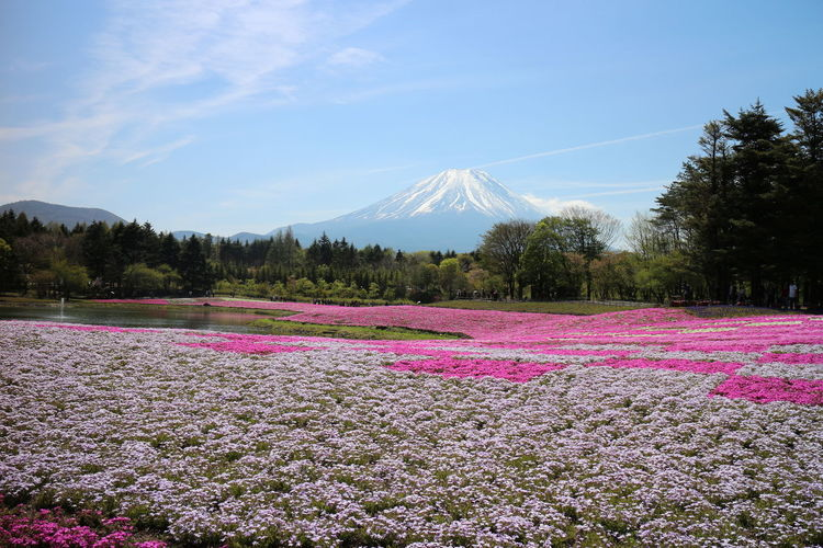 Scenic view of pink flowers on field against sky