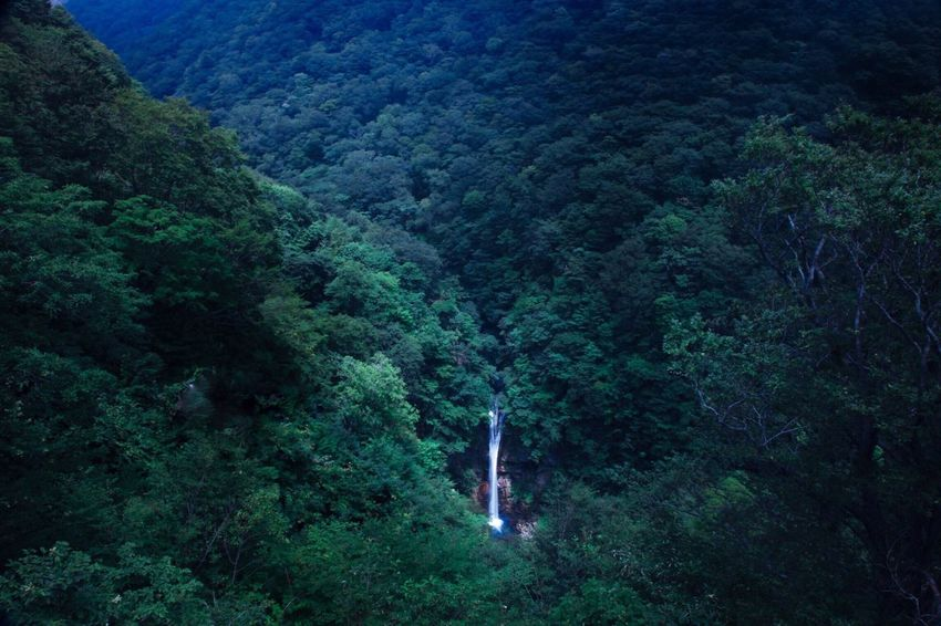 Waterfall in Deep Forrest Forest Forest Photography Green Color Nature Beauty In Nature Mountain Landscape EyeEm Nature Lover EyeEm Best Shots EyeEm Best Shots - Landscape Landscape_photography Dedicate To @intreccio ISOPIX