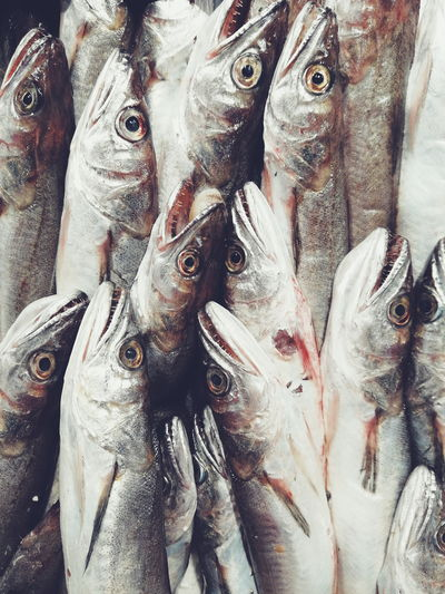 Fresh Fish Italy Fish Fresh Fish Market Healthy Eating Pattern Eyes Silver  Sharp Teeth Animals Animal Themes Close-up Food Indoors  Freshness Day Market Healthy Eating For Sale Backgrounds