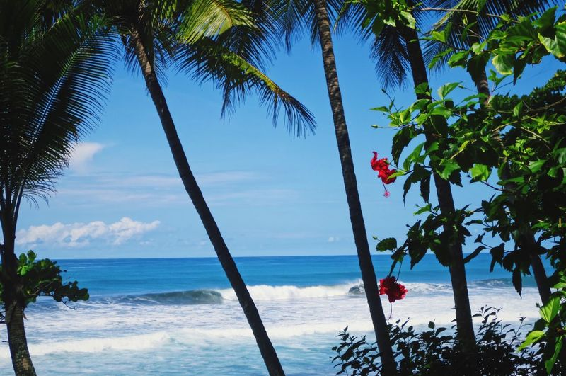 Flower and sea Corcovado Costa Rica Red Flower Palm Tree Sea Tree Beach Nature Beauty In Nature Blue Wave No People Water Scenics Horizon Over Water Day