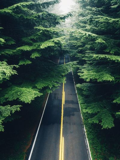 Forrest roads. Direction The Way Forward Plant Road Transportation Tree Road Marking Outdoors vanishing point Green Color Sign No People Growth Diminishing Perspective Sunlight Asphalt Symbol Marking Nature Day