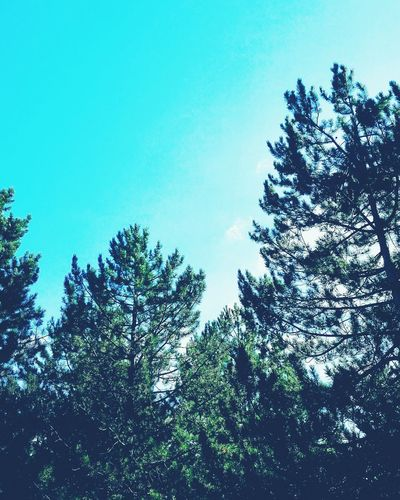 Looking sky. Sky is the limit.....(on instagram:@federica_nav) Clear Sky Nature Tree Blue Sky Beauty In Nature Forest Day No People Scenics Freedom Tranquility Mountainsky