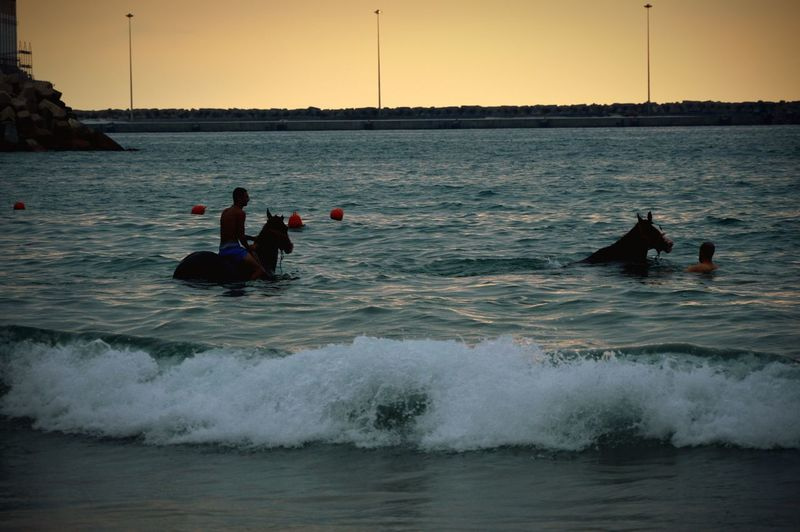 Two Is Better Than One Sea Swimming Water Horses Lifestyles Vacations