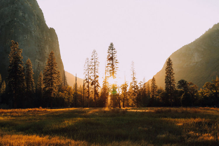California Camping EyeEm Nature Lover Fall Beauty Fall Colors Grass Landscape Light Majestic Mountains Nature Nature_collection Outdoors Physical Geography Scenics Sunlight Sunset Sunset_collection Tranquil Scene Tranquility Travel Destinations Tree Valley Yosemite Yosemite National Park