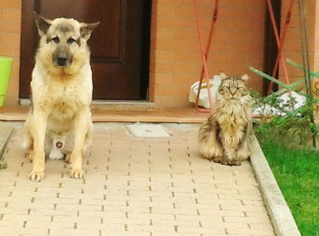 Cat and Dog, Friends Love Them ❤