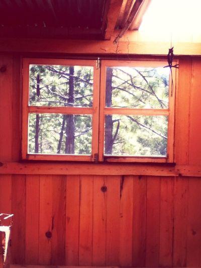 Sanmateoriohondo Backtonature Cabin In The Woods Taking Photos