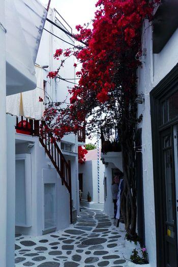 Building Exterior No People Cloud - Sky Mykonos Huwawei Honor7 Flower Purple White SuperRed Red Neighborhood Map