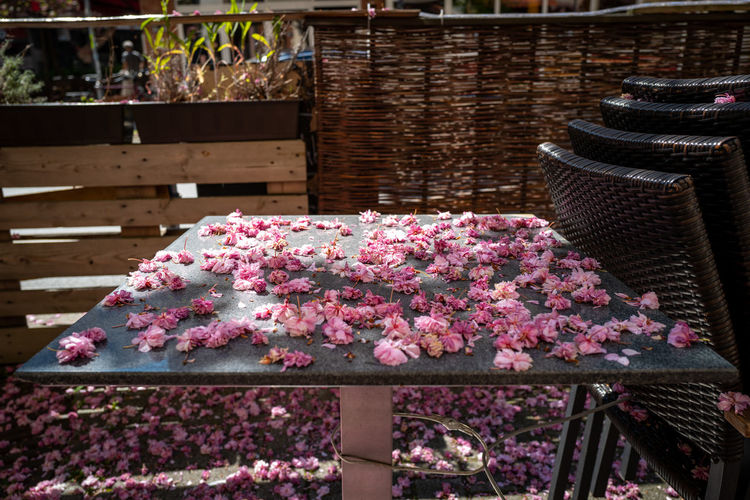 End of cherry blossom season Flower Flowering Plant Plant Freshness Beauty In Nature Pink Color Nature Fragility Vulnerability  No People Petal Growth Day Basket Inflorescence Outdoors Flower Head Close-up Table Blossom Springtime Softness Flower Pot Cherry Blossom