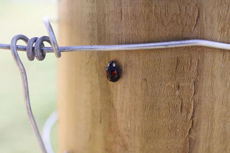 Close-up of ladybug on wooden fence